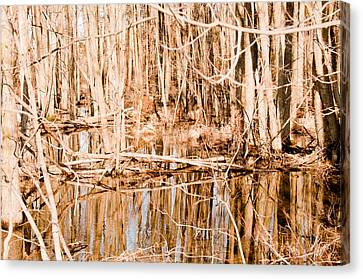 Reflection 2 Canvas Print by BandC  Photography