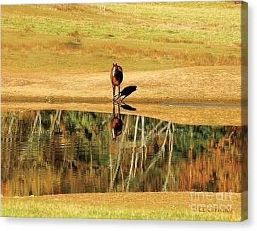 Canvas Print featuring the photograph Reflection by Carol Lynn Coronios