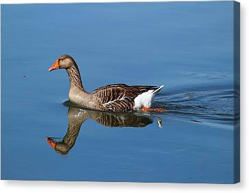 Canvas Print featuring the photograph Reflection by Lynn Hopwood