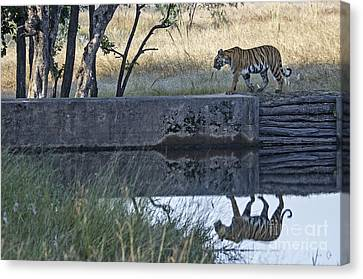 Reflection Of A Tiger Canvas Print by Pravine Chester
