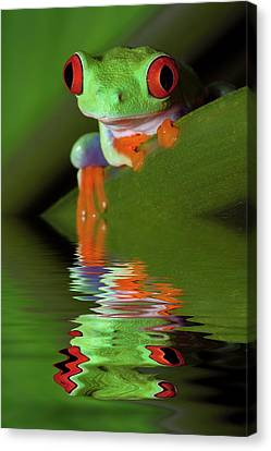 Reflection Of Red-eyed Tree Frog Canvas Print by Jaynes Gallery