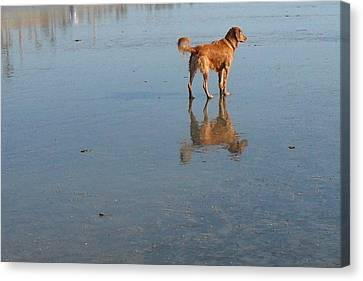 Reflection Of Rusty Canvas Print by Mark Barclay