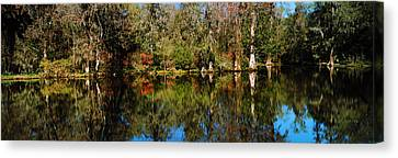 Reflection Of Spanish Moss Covered Canvas Print by Panoramic Images