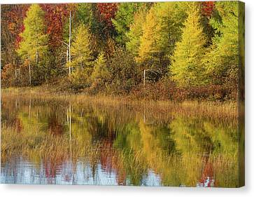 Reflection Of Trees In A Pond, Alger Canvas Print by Panoramic Images