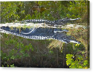 Reflection Canvas Print by Wild Expressions Photography