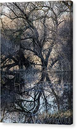Reflections Canvas Print by Brian Williamson