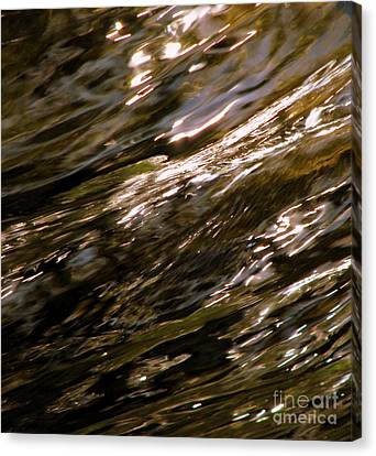 Reflections Canvas Print by C Ray  Roth
