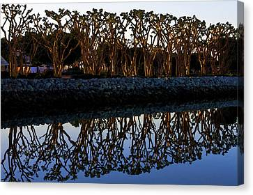 Canvas Print featuring the photograph Reflections In First Light by Gary Holmes