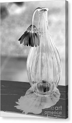Reflections Lie Canvas Print by Amanda Barcon