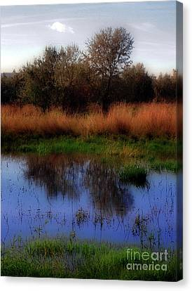 Reflections Canvas Print by Molly McPherson