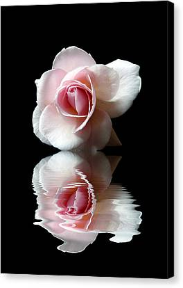 Reflections Of A Rose Canvas Print