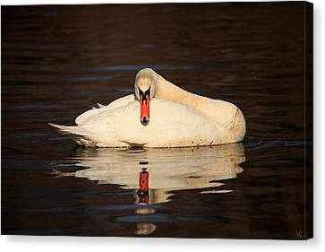 Reflections Of A Swan Canvas Print by Karol Livote