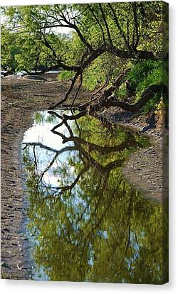 Reflections Of Beauty Canvas Print by Joy Bradley