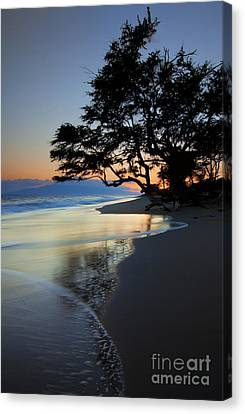Reflections Of One Canvas Print by Mike  Dawson