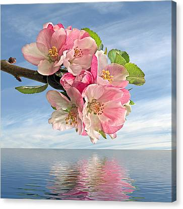 Reflections Of Spring At Apple Blossom Time - Square Canvas Print by Gill Billington