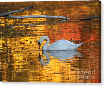 Reflections On Golden Pond Canvas Print