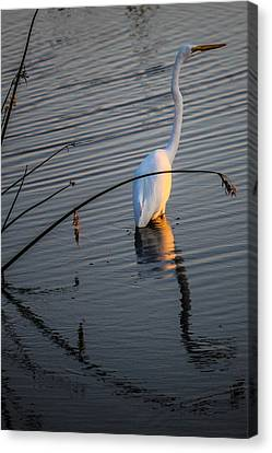 Reflections One Canvas Print by Lesley Brindley
