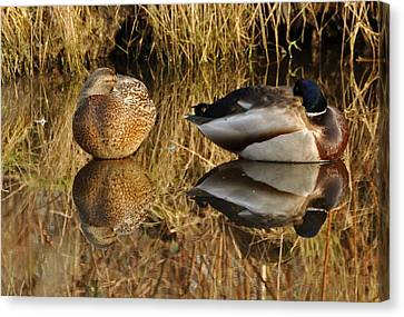 Canvas Print featuring the photograph Reflections by Sabine Edrissi