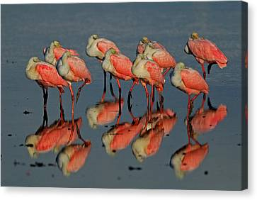 Reflections Canvas Print by Stefan Carpenter