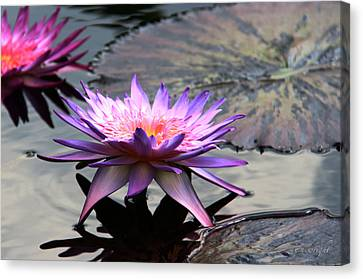 Dark Water Reflections Canvas Print by Yvonne Wright