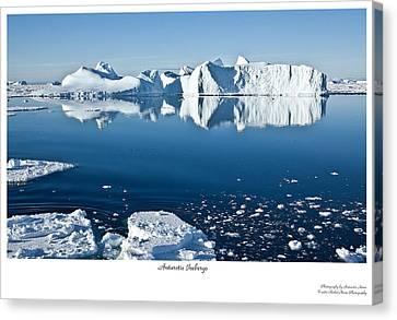 Reflective Icebergs Canvas Print by David Barringhaus