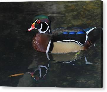 Reflective Wood Duck Canvas Print by Deborah Benoit