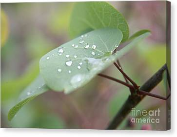 Refreshed  Canvas Print
