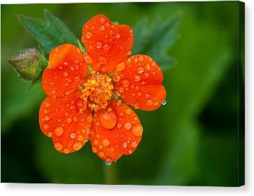 Close Focus Floral Canvas Print - Refreshing by Matt Dobson
