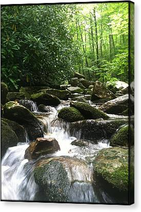 Refreshing Waters Canvas Print by Tony Clark