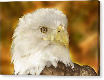 Canvas Print featuring the photograph Regal Eagle  by Brian Cross