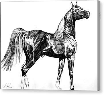 Regal Stance Canvas Print by Audrey Van Tassell