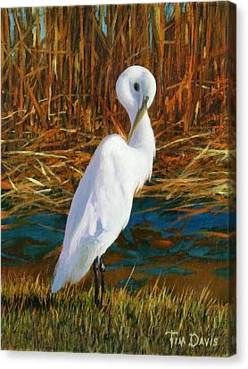 Regal White Canvas Print by Tim Davis