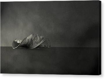 Reincarnate Canvas Print by Mark  Ross