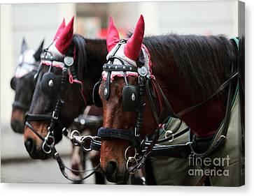Reindeer Horses Canvas Print