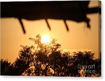 Relaxed Sunset Canvas Print by Four Hands Art