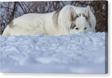 Relaxing In The Snow Canvas Print