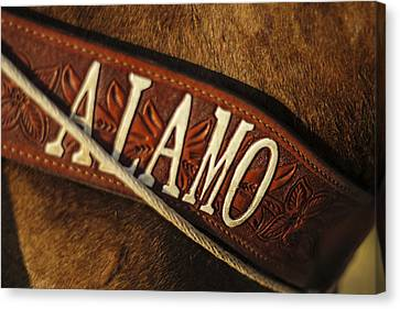 Remember The Alamo Canvas Print by Amber Kresge