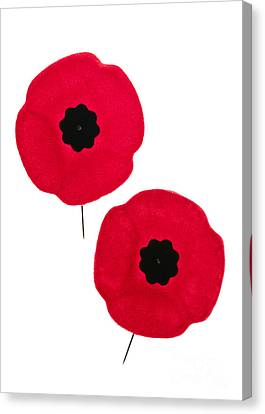 Remembrance Day Poppies Canvas Print by Elena Elisseeva