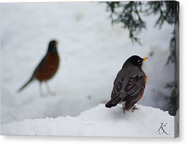 Reminiscing Robin Canvas Print