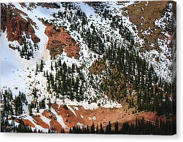 Remnants Of Snow In The Pines Canvas Print by Paulette B Wright