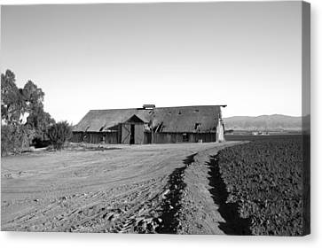 Old Barns Canvas Print - Remnants Of The Grapes Of Wrath by Barbara Snyder