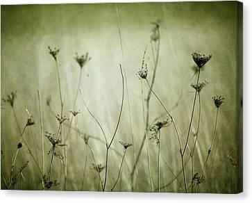 Remnants Canvas Print by Rebecca Cozart