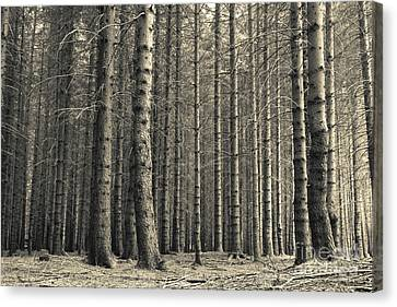 Canvas Print featuring the photograph Repeated Silence by Charles Lupica