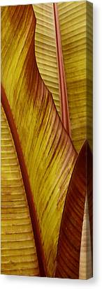 Repose - Leaf Canvas Print by Ben and Raisa Gertsberg