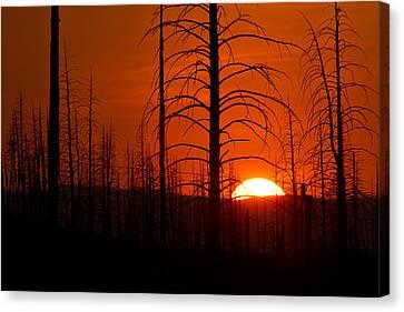 Requiem For A Forest Canvas Print by Jim Garrison