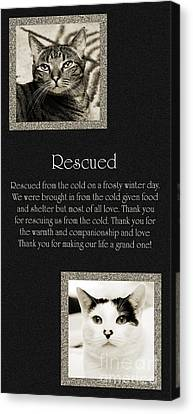 Rescued Canvas Print by Andee Design