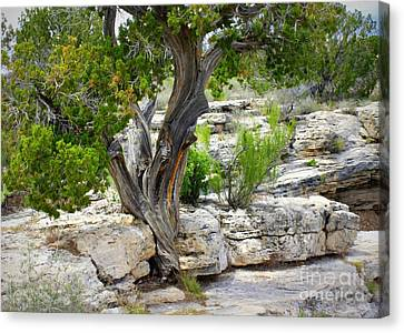 Resilient Tree Canvas Print