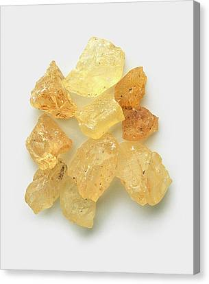 Resin From Protium Copal (copal Tree) Canvas Print by Dorling Kindersley/uig