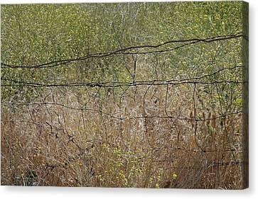 Resonate Canvas Print by Viktor Savchenko
