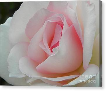 Canvas Print featuring the photograph Resplendent by Deb Halloran